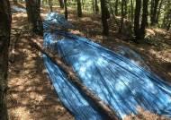 푸른 비닐 덮혔던 광해군 '태실', 16년만에 문화재 등록 추진