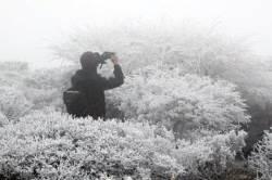 [서소문사진관]눈꽃이 활짝~ 한라산은 지금 설국(雪國)