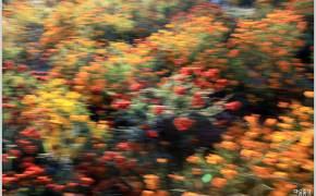 [조용철의 마음 풍경] 석양의 들꽃