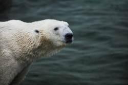 """""""북극 급속한 온난화, 북극의 특성 때문""""...IBS, '북극증폭' 원인 규명"""