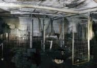 이효리 '순심이' 입양했던 유기동물보호소 화재…260마리 죽어