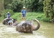 [3분 과학] '암 사망률' 인간 17% 코끼리 5%···크게 차이나는 이유