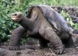 100세 '외로운 조지' 유전자···거북이 장수 비밀 밝혔다