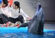 """""""돌고래 '태지', 퍼시픽랜드에 기증 반대합니다"""" 동물단체 서명운동"""