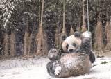[사진] 눈이 즐거운 판다 … 서울 오늘 아침 영하 7도