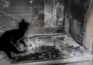"""주택서 화재 """"고양이가 전기레인지 작동""""…고양이도 죽은 채 발견"""