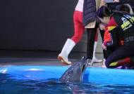 계약 끝나는데 갈 곳 없어…돌고래 '태지'의 기구한 운명