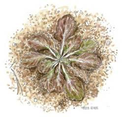 [<!HS>소년중앙<!HE>] 황경택 쌤과 자연이랑 놀자 10.로제트 식물