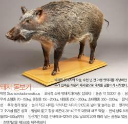 [<!HS>소년중앙<!HE>] 2000여 년 전부터 우리 곁 지켜온 부와 복의 상징 '돼지'