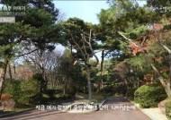 靑서 34년 근무 직원이 말하는 '청와대 나무' 다큐멘터리 공개