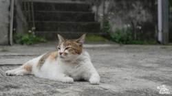 살인 진드기의 집 길고양이, 치명적 바이러스 전염 위험