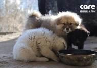 '케어' 보호소 가보니…물 대신 얼음 깨먹는 강아지들