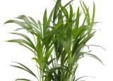 먼지 피하자,판매 120% 늘어...공기정화식물 불티나게 팔린다
