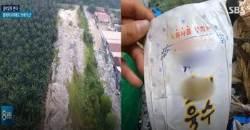 이번엔 말레이시아…팜트리 숲서 발견된 한국산 쓰레기 1만t