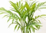 미세먼지 공포의 나흘…공기정화 식물 119% 더 팔렸다