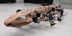 '악어뼈가 걷는다' 고생대 악어 '오로베이츠' 화석, 로봇 기술로 다시 움직여