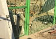 녹슨 철골, 널브러진 폐자재…케어 안되고있는 '케어'의 동물보호소