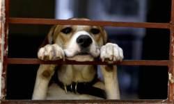 유기견 안락사 없는 독일…개가 세금·버스비도 낸다