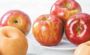 [라이프 트렌드] 세배와 함께 우리 과일 드리시죠