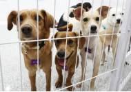 동물보호단체 후원금으로 집 월세·차 할부금·여행비 낸 대표