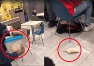 맥도날드 매장서 벌어진 '쥐 테러'에 혼비백산