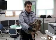 한달새 닭 11마리 '꿀꺽'···파출소에 구금된 수리부엉이