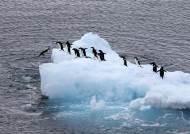 용기와 배려를 보여주는 남극의 '퍼스트 펭귄'
