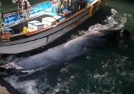 멸종위기종 '멸치고래', 여수 앞바다에서 첫 혼획