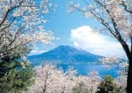 [비즈스토리] 화산·벚꽃 어우러진 남규슈의 봄 … 분홍빛 추억을 가슴에 새긴다