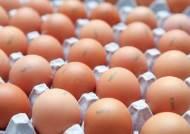 달걀 껍데기에 '0221'...닭이 알 낳은 날짜 확인 가능해진다