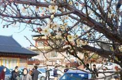 [단독] 서울 영하 12도 이하 작년 12일 올겨울 1일…한파 사라졌다