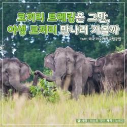 [카드뉴스] 코끼리 트레킹은 그만, 야생 코끼리 만나러 가볼까