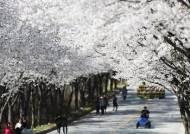 평년보다 4~5일 이른 올 벚꽃 예보, 봄맞이 준비하세요