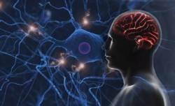 줄기세포로 뇌 신경세포도 살린다...치매·파킨슨 치료에 활용 기대