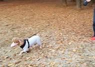 야외배변만 하는 우리 강아지는?···미세먼지 대처법