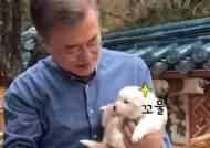 """靑 '풍산개 6남매' 집들이 영상 공개…文 """"제일 살찐 놈이 산이"""""""