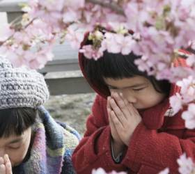 동<!HS>일본<!HE> 대<!HS>지진<!HE> 8주기...그래도 꽃은 피고, 삶이 계속된다