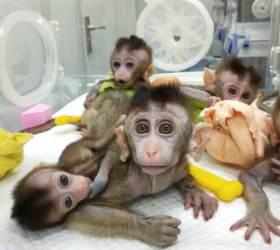 """[<!HS>2050년<!HE>의 <!HS>경고<!HE>] """"유전자 치료 한국서 막혀…과학자도 환자도 중국 간다"""""""