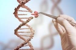 유전자 편집 '모라토리엄' 선언...인간 배아 임상 적용 중단돼야