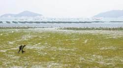 연두 봄동, 분홍 노루귀, 초록 파래… 알록달록 물든 진도