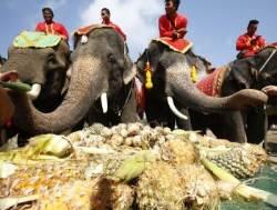 [서소문사진관]날마다 오늘만 같아라.무제한 뷔페식 즐기는 코끼리.