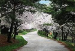벚꽃 이불 덮고 자볼까…봄꽃 좋은 자연휴양림 6