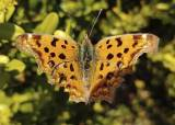 [권혁재 핸드폰사진관] 봄 나비를 봄