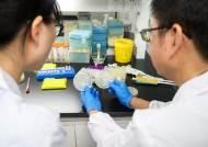 유전자가위 기술 이용 '지놈편집식품'…일본 후생성 허용 발표