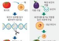 일본 '지놈편집 식품' 시판 허용