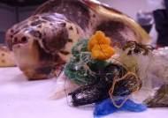 해파리 대신 비닐 먹어…바다거북 생존 위협하는 해양 쓰레기