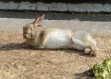 [야단法석] '몽마르트' 살던 토끼들, 대검찰청 이주한 까닭