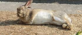 [<!HS>야단法석<!HE>] '몽마르트' 살던 토끼들, 대검찰청 이주한 까닭
