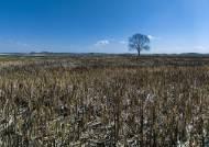 [권혁재 핸드폰사진관] 지금은 거뭇한 땅, 불탄 들에도 봄은 오는가