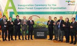 민둥산의 기적 쓴 '산림 부국' 위상 세계에 알린다